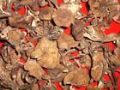 北京野生榛蘑专卖北京哪卖野生榛蘑