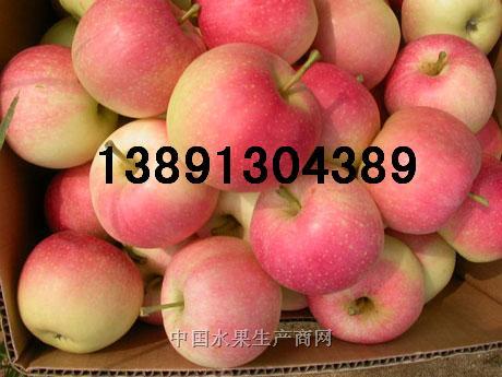 陕西早熟嘎啦苹果美八苹果晨阳夏红金世纪苹果产地
