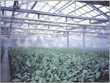 大棚降温|温室加湿|玻璃大棚喷雾降温造景