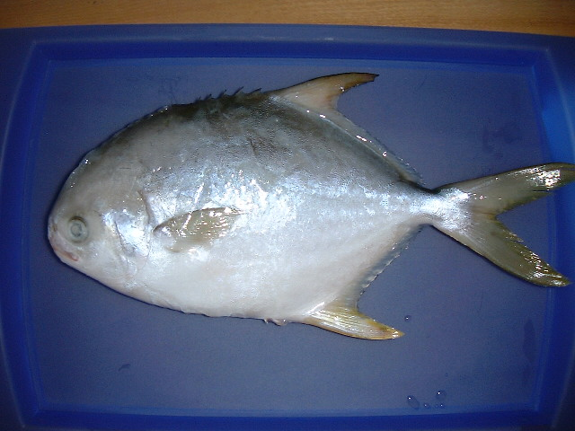 现正在吃鲳鱼很风行 身价赶超小黄鱼