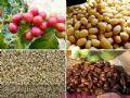 进口咖啡豆/上海咖啡豆专卖店